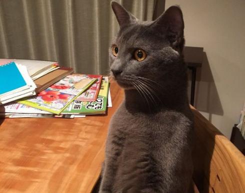 猫 人間っぽい 座る 着ぐるみ