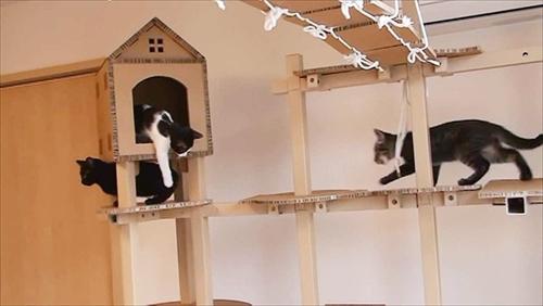 猫用遊具FitTree