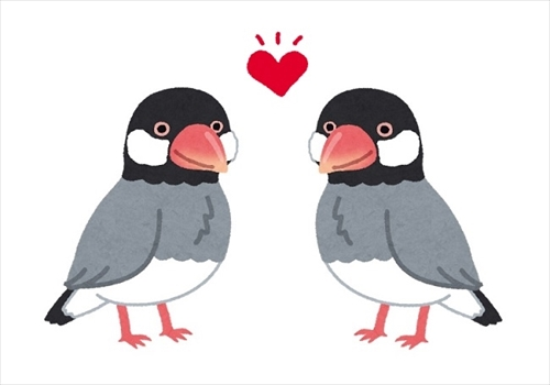 北海道大学 文鳥の求愛行動