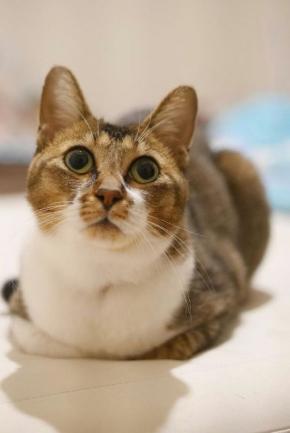 猫 失踪 発見 ポケモンGO Twitter 梶尾真治