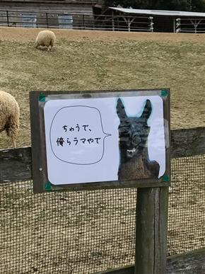 """アルパカいる! 「ちゃうで、俺らラマやで」 大阪""""ハーベストの丘""""のラマさんによるシュールすぎるノリツッコミ"""