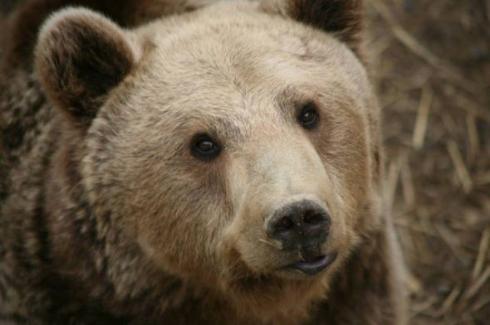 熊 救助 アルバニア 別熊