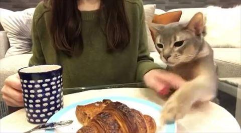 猫 クロワッサン