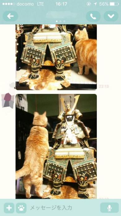 五月人形 猫 勘違い 実家 ホームシック