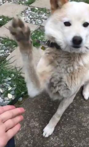 犬 お手 外す ドヤ顔