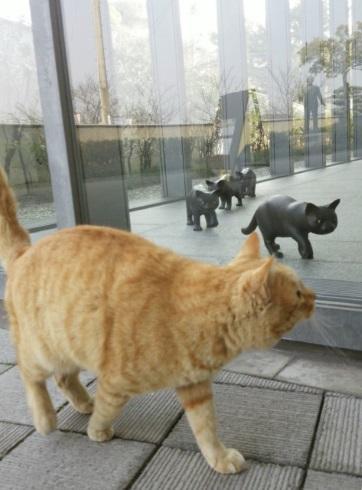 尾道市立美術館 招き猫亭コレクション 猫まみれ展 侵入