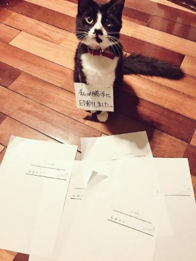 ツイート未遂 印刷 猫 犯人