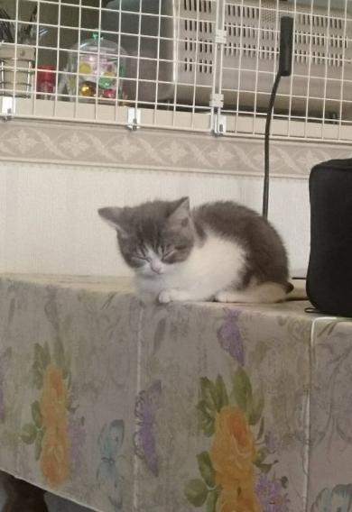 猫 テーブル 降りる 怖く 寝る