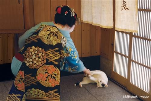 岩合光昭 ねこの京都