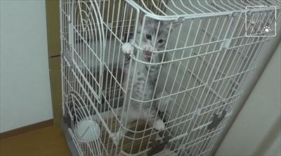猫のちゃいとすし