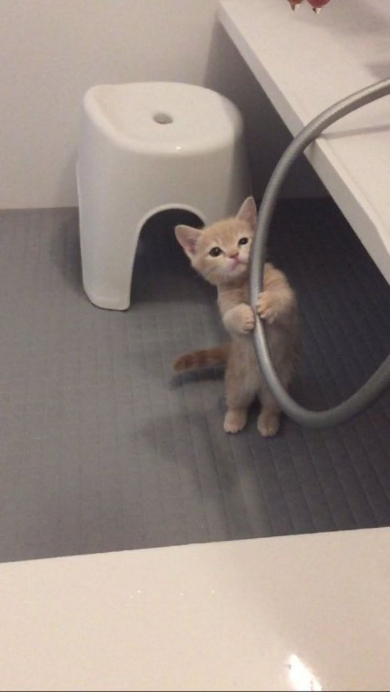 シャワー猫