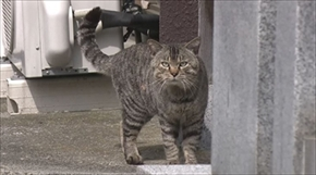 旅猫ロマン 岩手県遠野