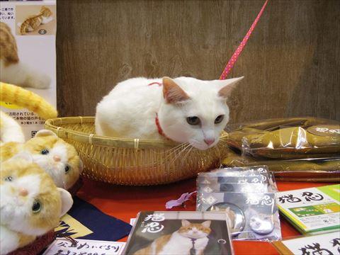 女優猫のさくらちゃん