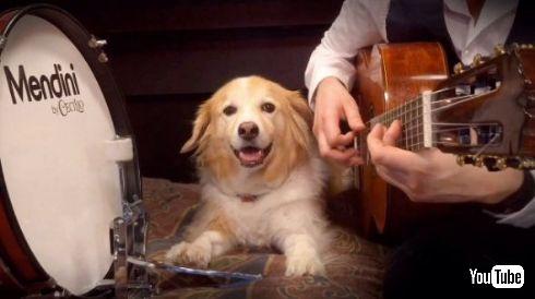 犬 ドラム ペダル リズム キープ BPM 演奏