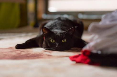 黒 猫 ホットカーペット 温かさ 味わう