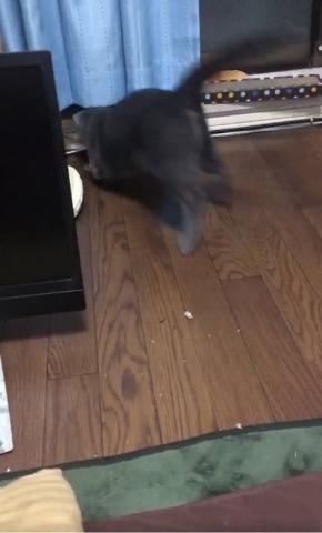 猫 煮干し 下手