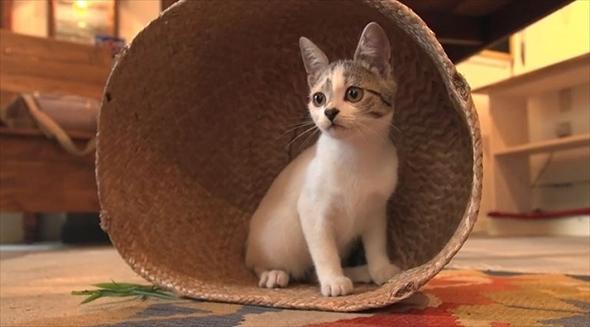 旅猫ロマン 那須高原