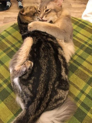 猫 ハグ そういった行為 いちゃいちゃ