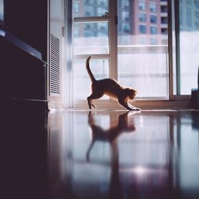 すてきな猫さん