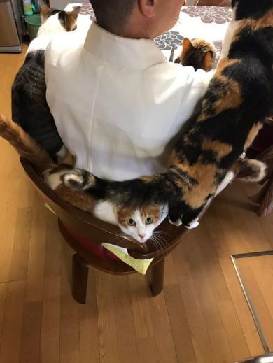 住職 朝ご飯 猫ましまし 猫全のせ