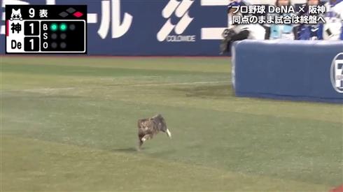 野球のDeNA-阪神戦、緊迫の場面にニャンと助っ人が乱入 同じネコ科のタイガースにエールを送る