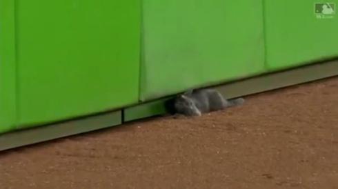 猫 メジャーリーグ 乱入 マイアミ マーリンズ