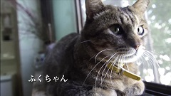旅猫東伊豆