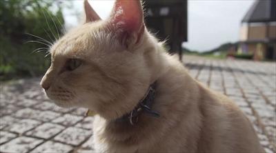 旅猫ロマン絶景西伊豆