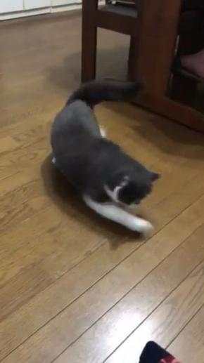 猫 見えない 誰 遊ぶ じろう