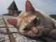 静岡県・西伊豆 絶景の岬やガラス工房、温泉宿で暮らす猫ちゃんたち