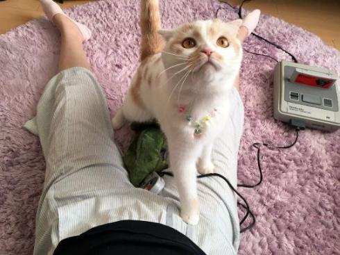 猫 座り方 人間 ホイップ