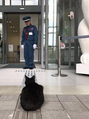 尾道市立美術館 猫 警備員 トートバック