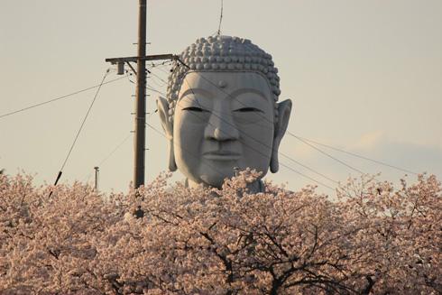 桜の上の大仏様