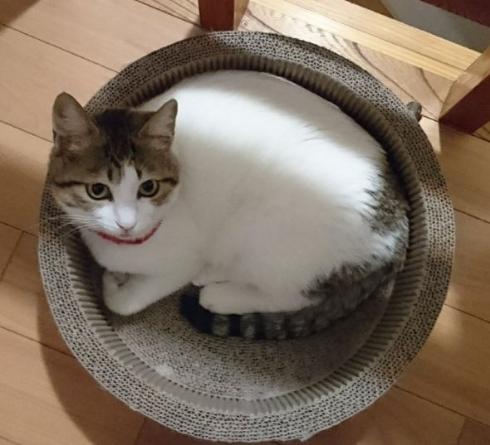 猫 謎 表情 ムンク 叫び