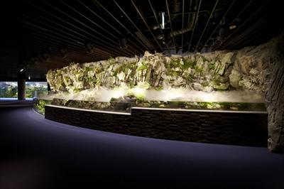 京都水族館オオサンショウウオ