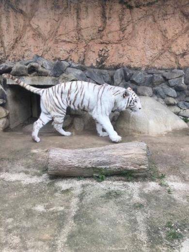 けものフレンズ 東武動物公園 コラボ マレーバク パネル 食べる