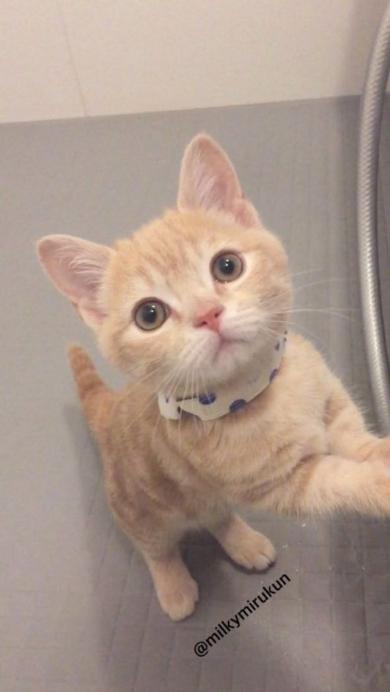 ホース つかむ 猫 ミルくん 大きく ビフォーアフター