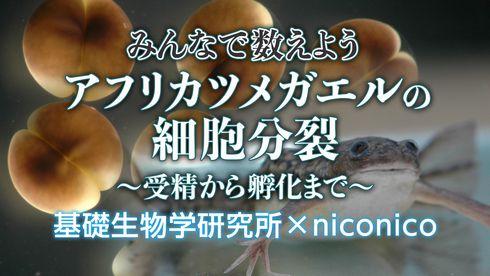 ニコ生 カエル 細胞分裂