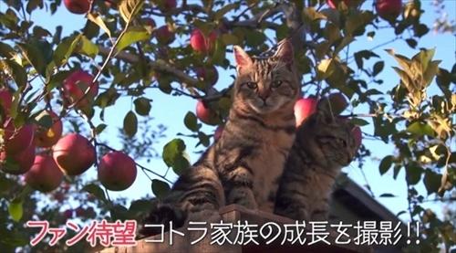 劇場版 世界ネコ歩き