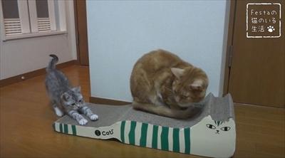 猫のちゃいとすし 仲良し姉妹の日常