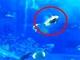 「フラッシュ撮影のせいでマグロが死んだ」誤情報拡散 美ら海水族館は「フラッシュ影響しない」
