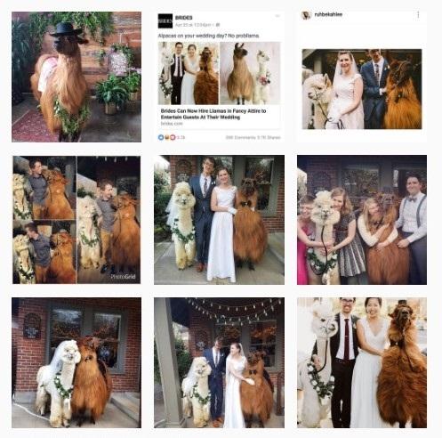WeddingLlamas