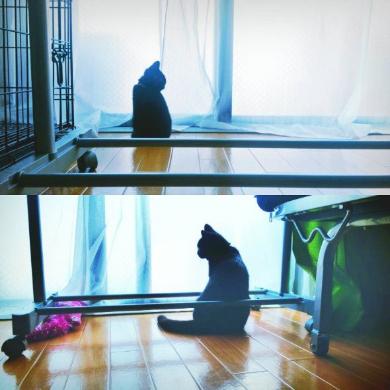 猫 フライパン 乗る お腹空いた 仏陀