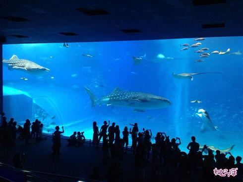 Twitter「フラッシュでマグロが死んだ」←デマだったのはともかく、水族館でのフラッシュ撮影の是非は?