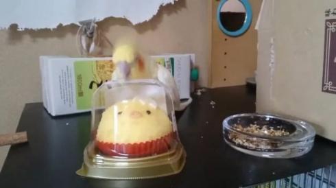 いいちこ インコ 助ける ことり ケーキ