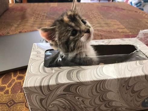 猫 ティッシュ 箱 かくれんぼ