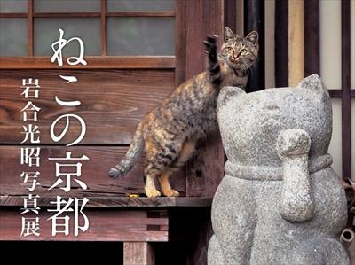 岩合光昭さんLINEスタンプねこの京都