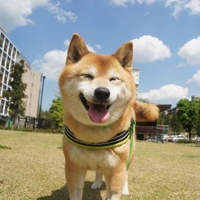 ベースボール犬わさび