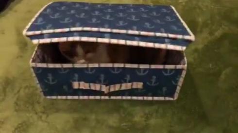 猫 宝箱 ミミック
