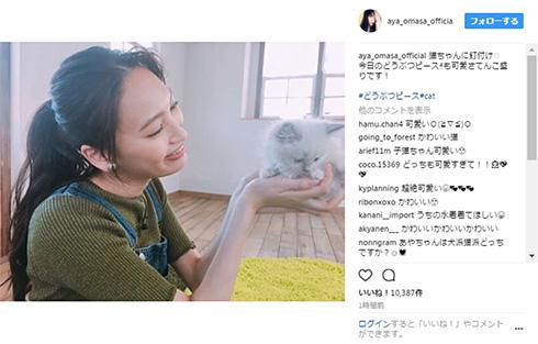 大政絢と猫